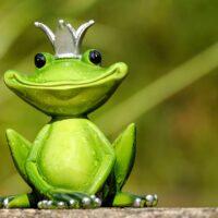 Giải mã chiêm bao thấy ếch? Nên đánh con gì?