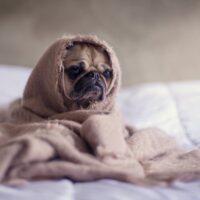 Ngủ mộng thấy chó chết đánh số mấy? – Ý nghĩa giấc mơ