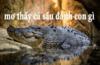Chiêm bao thấy cá sấu nên đánh đề bao nhiêu