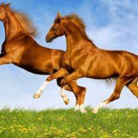 Con Ngựa số mấy? Mơ thấy Ngựa đánh con gì?