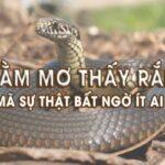 mộng thấy con rắn