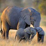 Mộng thấy voi