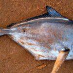 mộng thấy cá chết