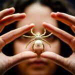 giấc mơ thấy nhện
