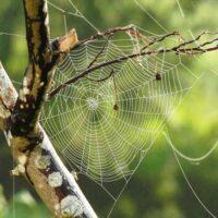 Điềm báo khi nằm mơ thấy nhện bạn không nên bỏ qua