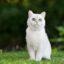 Giải mã nằm mơ thấy mèo và con số may mắn ?