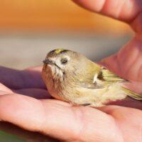 Chiêm bao thấy bắt chim đánh số gì – ý nghĩa gì