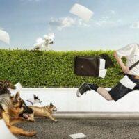 Chiêm bao bị chó đuổi đánh số mấy? – Ý nghĩa giấc mơ chó rượt đuổi